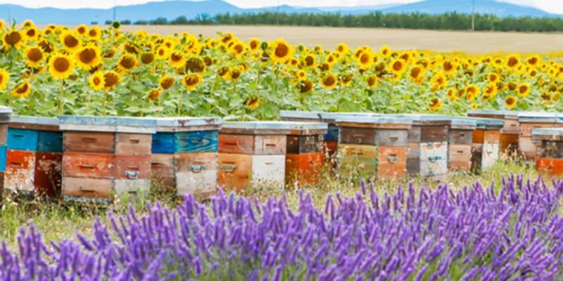 Bienenfutter Das Bienenjahr Header links