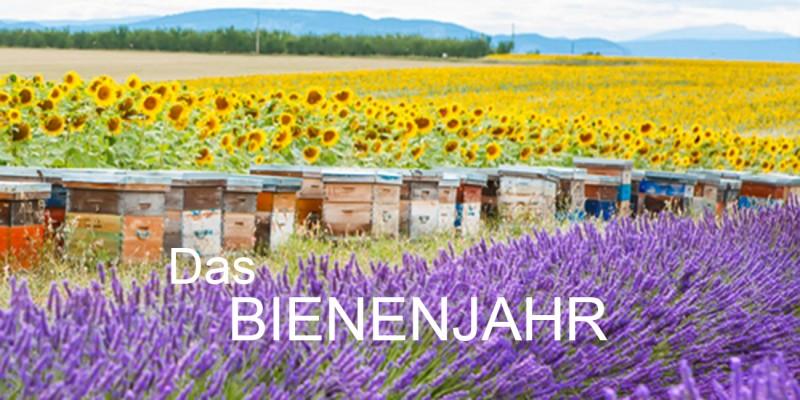 Bienenfutter Das Bienenjahr Header rechts