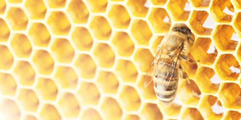 Das beste Bienenfutter ambrosia® Header links