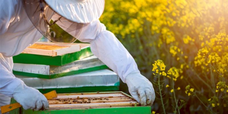Bienenfutter Fütterungsanlässe ambrosia® Header links