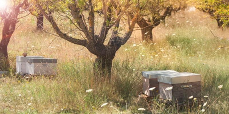 Bienenfutteralternativen Bienenfutter, Bienenfutterteig & Bienenfuttersirup ambrosia® Header links