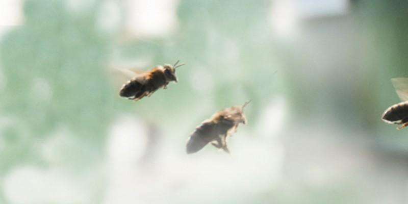 ambrosia-bienenfutter-kontakt