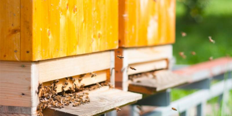 Bienenfutter Ratgeber Header Links