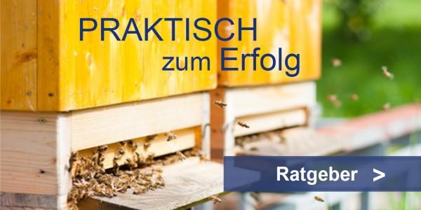Bienenfutter Ratgeber Teaser