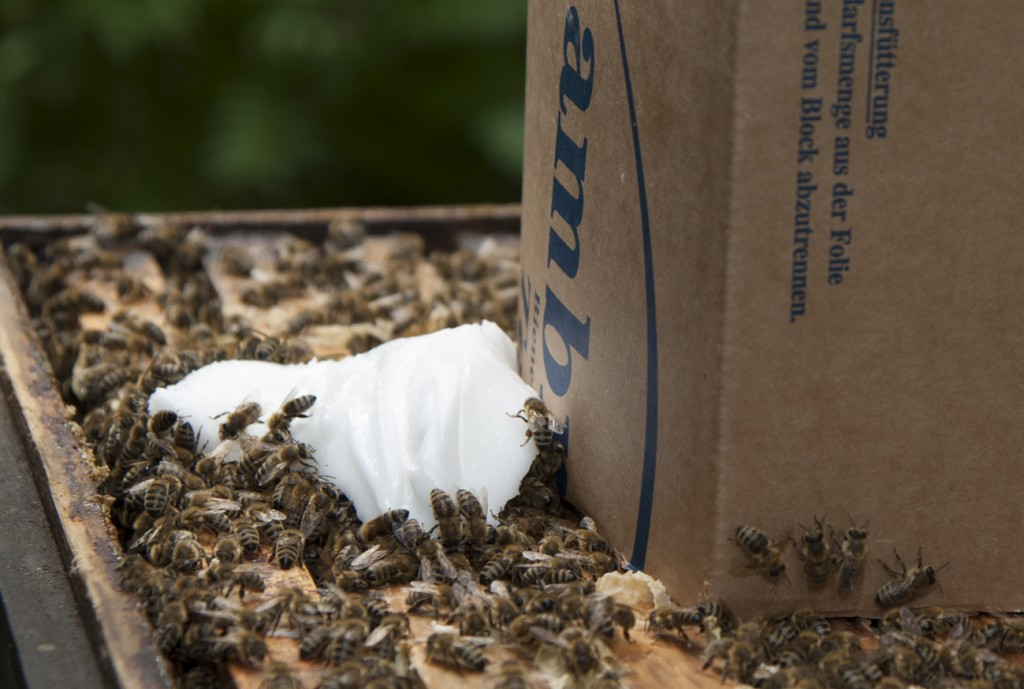 Ambrosia-Bienenfutter-Teig-Anwendung2