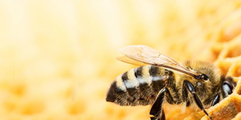 Bienenfutter ambrosia® Header links